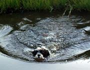 Land unter in München: Im Grünwalder Stadion schwammen Sonnabend nur die Seehunde