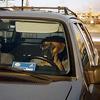 Hunde fahren oft besser Auto als Frauen Fußball spielen.