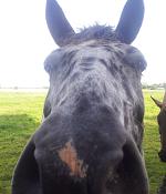 Hat nix mit Alexander Madlung zu tun: das Pferd von Pippi Langstrumpf